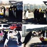 pingouin gourmands