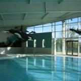 les orques, parc aquatique poisson en mousse